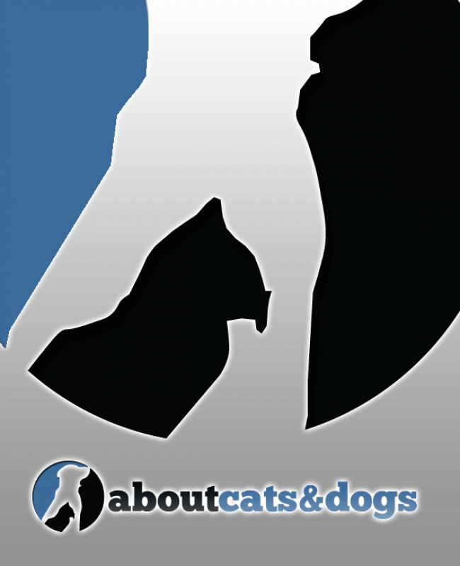 About Cats & Dogs – Website & Logo